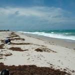 damon-2015-florida-300-day-3-d70-081.jpg