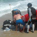 damon-2015-florida-300-day-3-d70-240.jpg