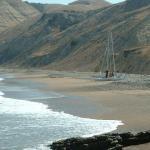 Santa Cruz Island Hoppers