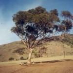 Tree-swing and table on Catalina's Isthmus