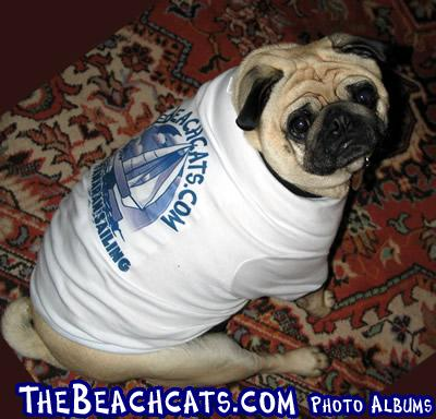 The Official Beachcats Dog Shirt
